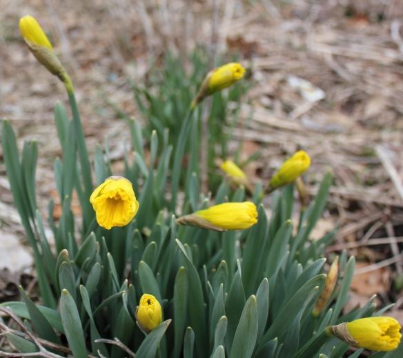 spring-13