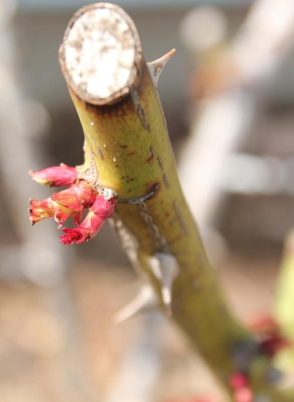 spring-9