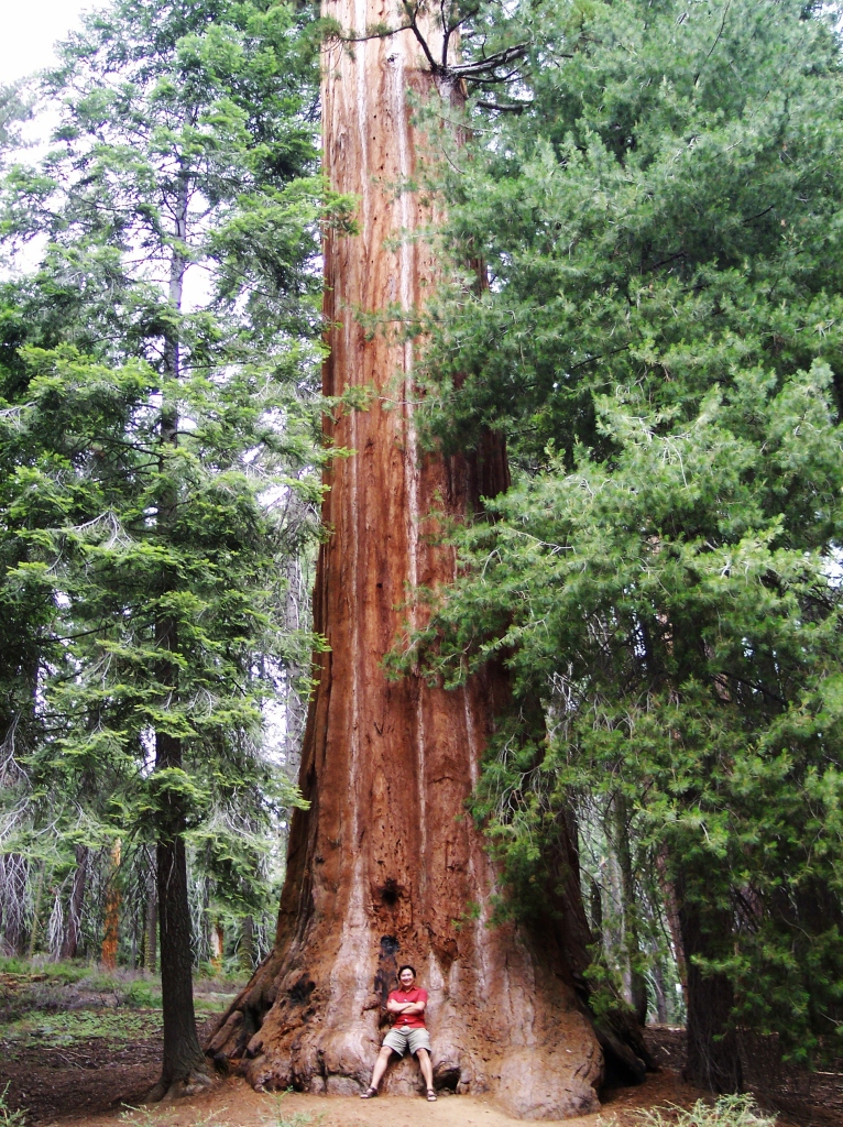sequoia national park - © Anvi Hoàng
